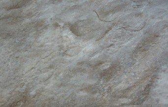 "coretec - fusion hybrid floor vinyl 12"" x 24"" - ashton slate"